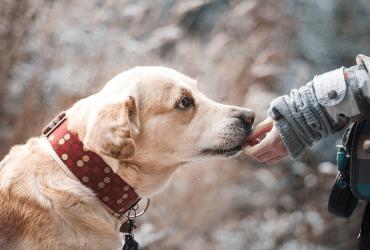 Éduquer mon chien à reconnaître son nom : la bonne méthode
