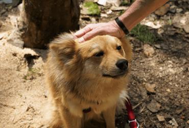 Education positive du chien : principes et bienfaits