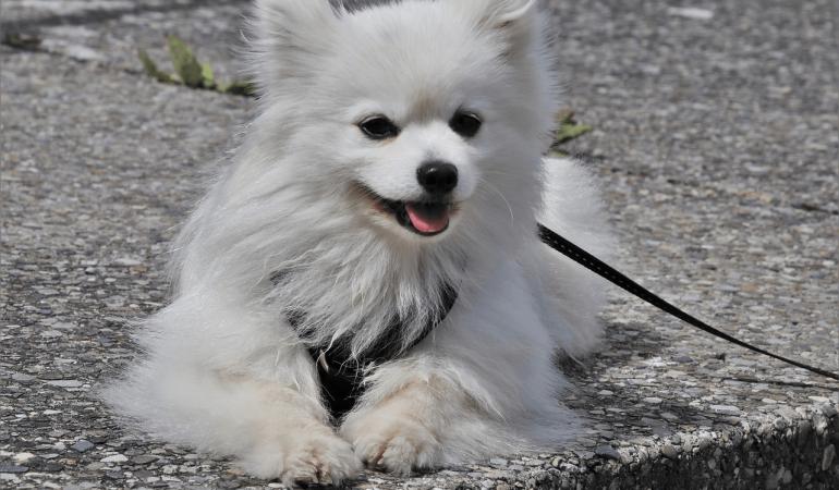 Apprendre à mon chien à marcher sans laisse