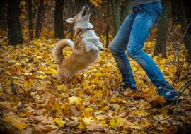 """Apprendre les ordres """"lâche"""" ou """"donne"""" à mon chien ?"""