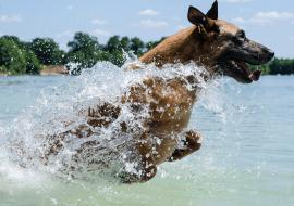 Comment apprendre a nager à mon chien