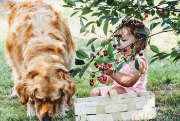 Coment empêcher mon chien de quémander à manger ?