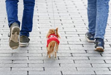 Apprendre à mon chiot à marcher en laisse : nos conseils