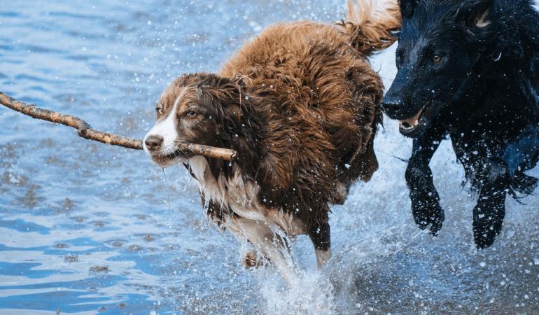 Comment maîtriser mon chien hyperactif ?