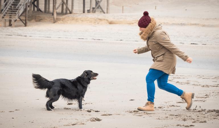 Comment gagner la confiance d'un chien ?