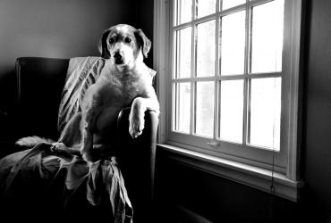Apprendre à mon chien à fermer les portes