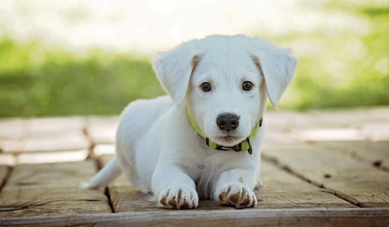 Mon chien est jaloux : comment y remédier ?