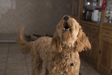 Quels sont les principaux troubles du comportement du chien ?