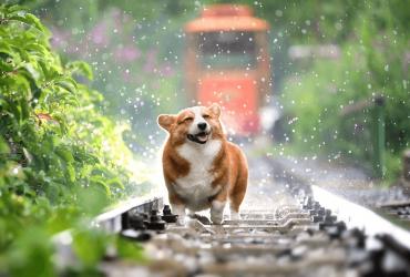Comment apprendre à mon chien à traverser la route ?