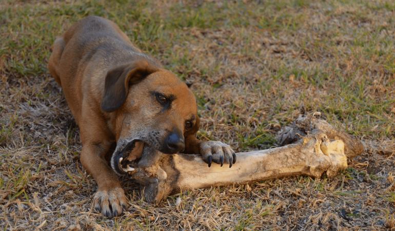 Comment empêcher mon chien de manger tout ce qui traîne ?