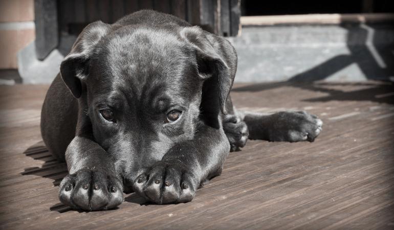 Comment gérer le pipi de joie de mon chien ?