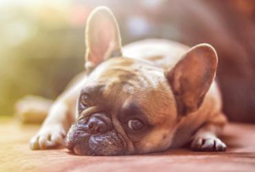 Mon chien déprime : que faire ?