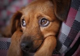 Comment donner confiance à son chien ?