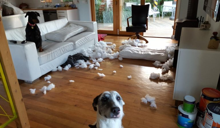 Comment maîtriser mon chien destructeur ?