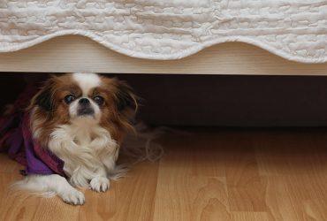 Pourquoi mon chien se cache ?