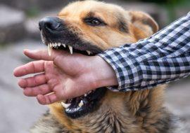 Que faire lorsque mon chien mord ?